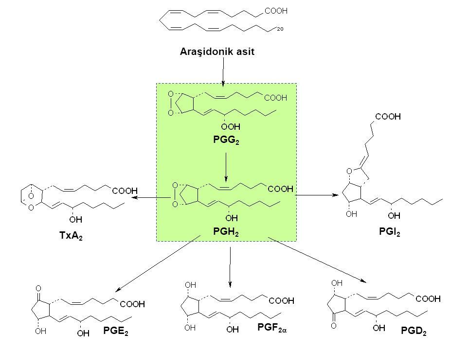 Araşidonik asit PGG2 PGH2 PGI2 TxA2 PGF2a PGE2 PGD2