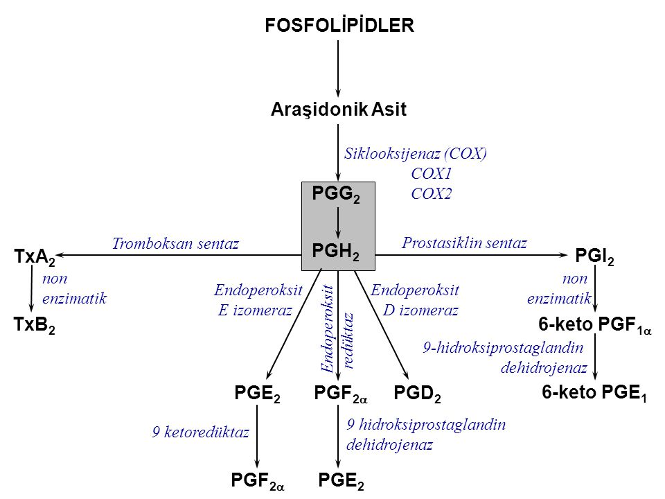 FOSFOLİPİDLER Araşidonik Asit PGG2 PGH2 TxA2 PGI2 TxB2 6-keto PGF1a