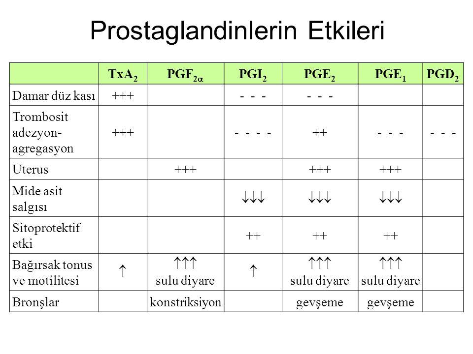 Prostaglandinlerin Etkileri
