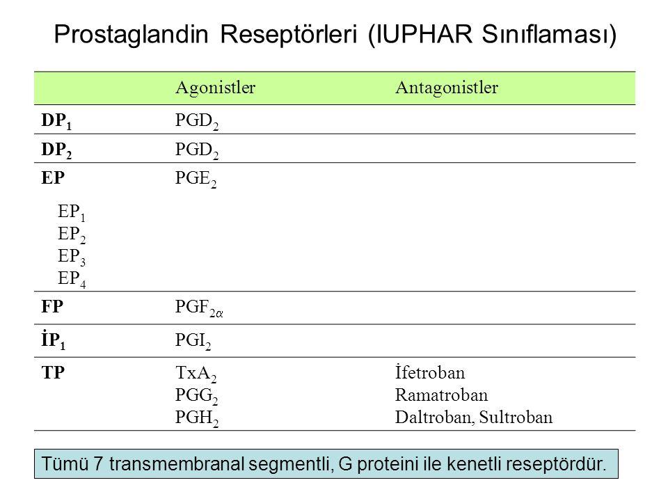 Prostaglandin Reseptörleri (IUPHAR Sınıflaması)