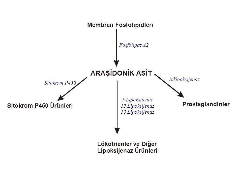 ARAŞİDONİK ASİT Membran Fosfolipidleri Prostaglandinler