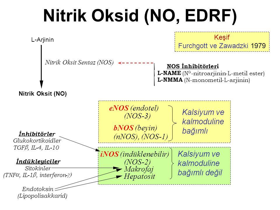 Nitrik Oksid (NO, EDRF) eNOS (endotel) Kalsiyum ve kalmoduline bağımlı