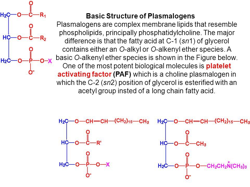 Basic Structure of Plasmalogens