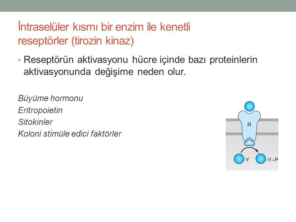 İntraselüler kısmı bir enzim ile kenetli reseptörler (tirozin kinaz)