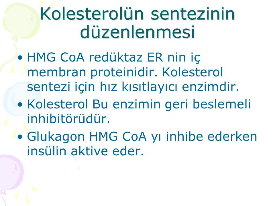 Kolesterolün sentezinin düzenlenmesi