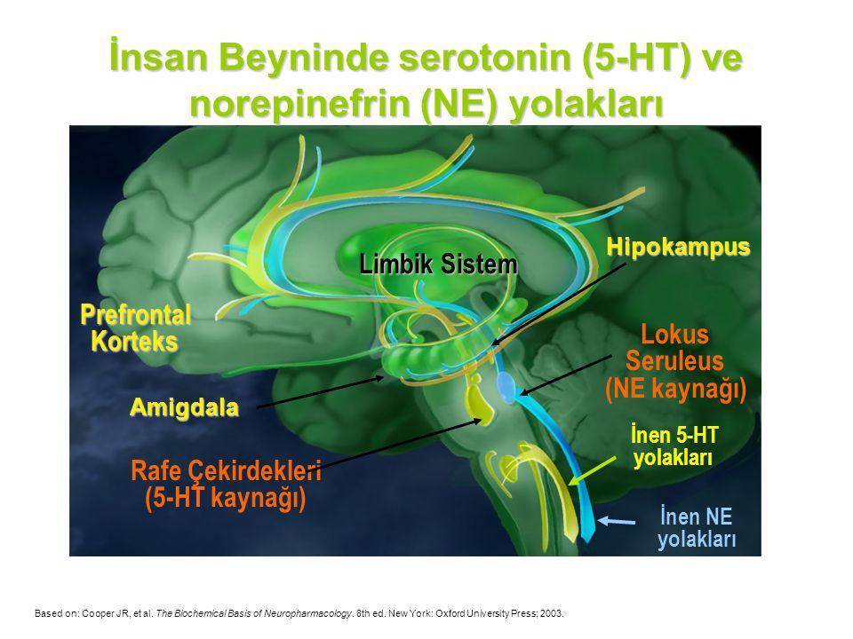 İnsan Beyninde serotonin (5-HT) ve norepinefrin (NE) yolakları