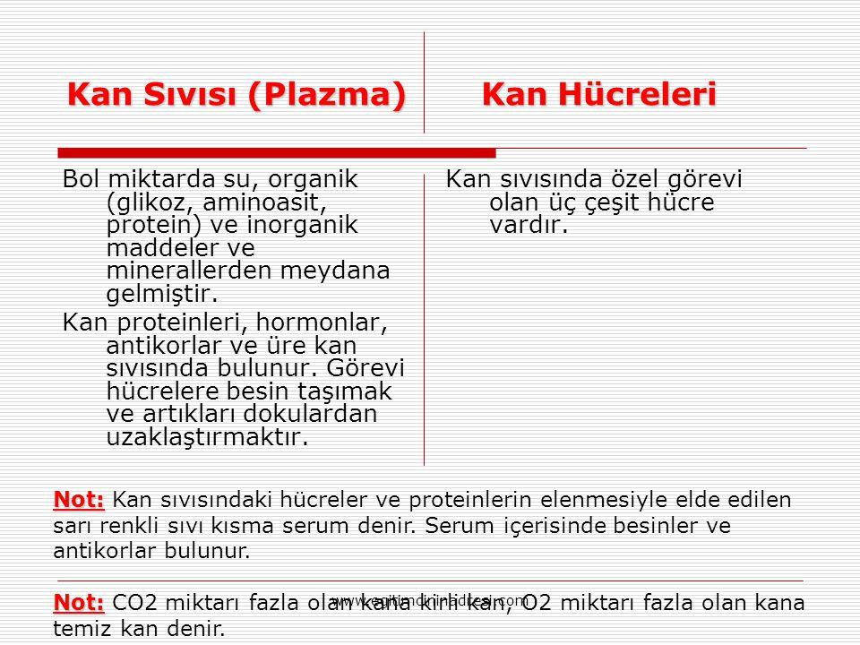 Kan Sıvısı (Plazma) Kan Hücreleri