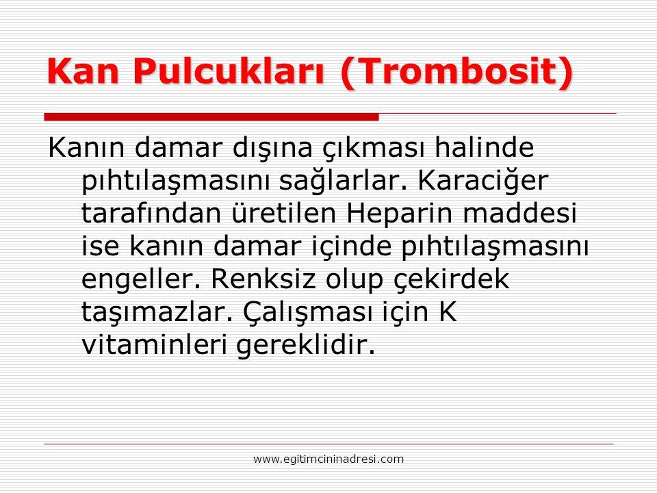 Kan Pulcukları (Trombosit)