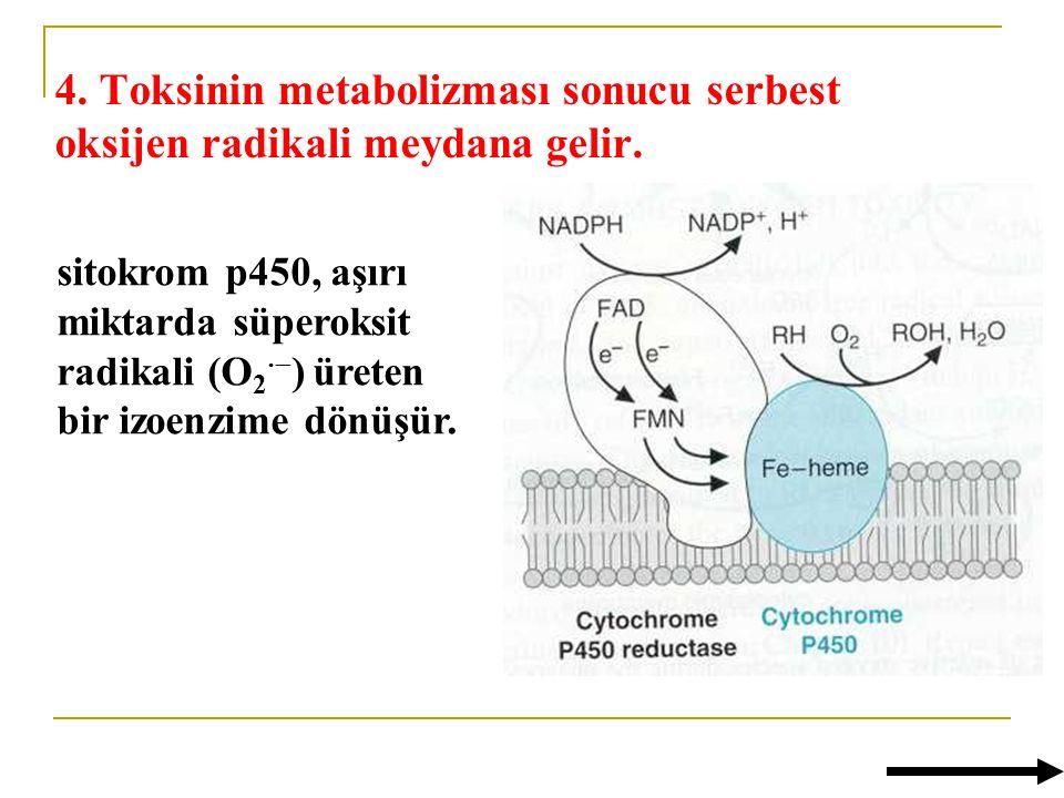 4. Toksinin metabolizması sonucu serbest oksijen radikali meydana gelir.