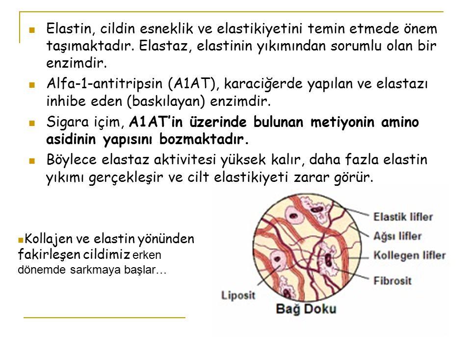 Elastin, cildin esneklik ve elastikiyetini temin etmede önem taşımaktadır. Elastaz, elastinin yıkımından sorumlu olan bir enzimdir.