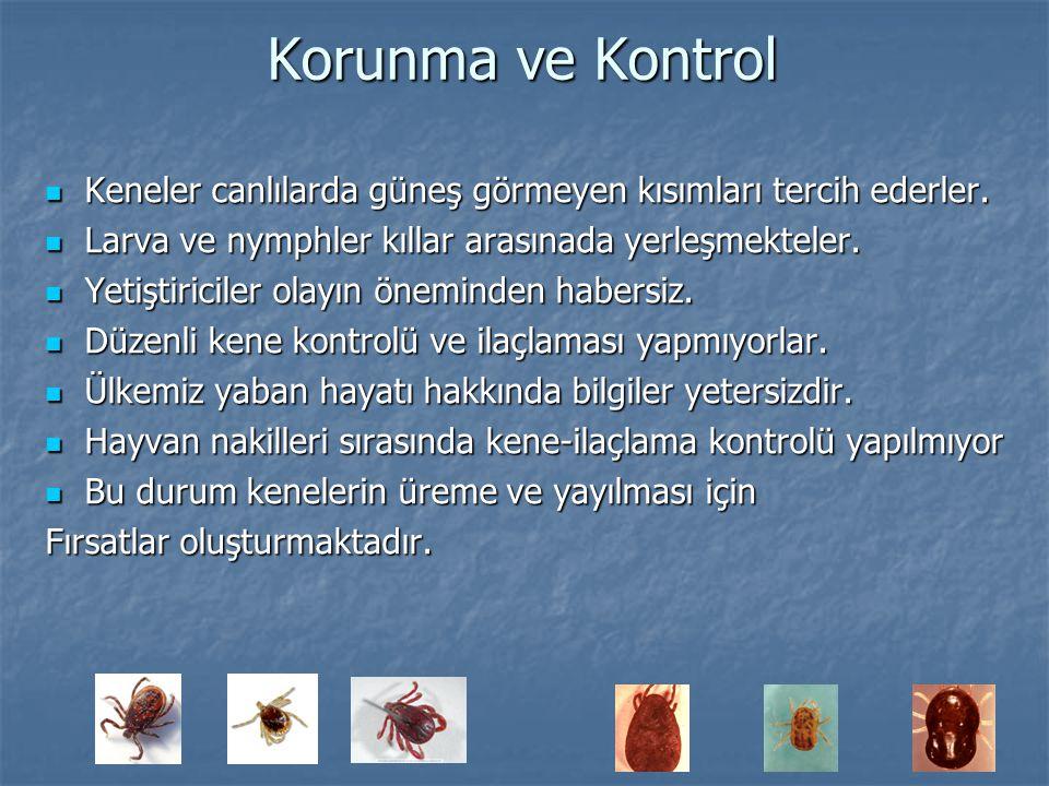 Korunma ve Kontrol Keneler canlılarda güneş görmeyen kısımları tercih ederler. Larva ve nymphler kıllar arasınada yerleşmekteler.