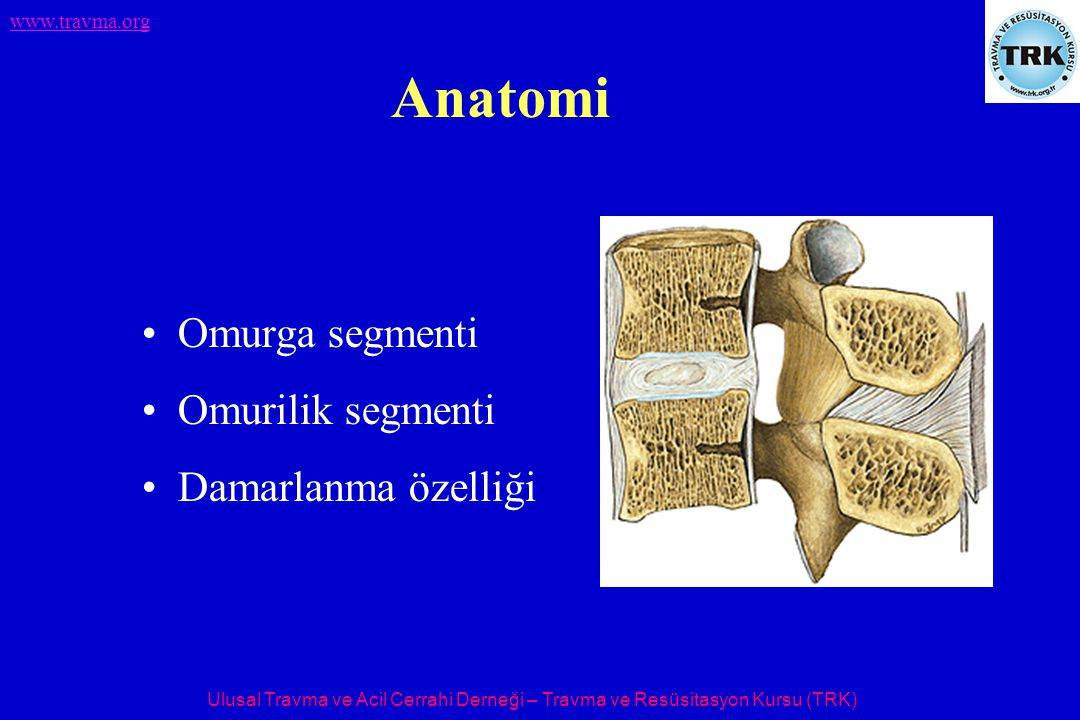 Anatomi Omurga segmenti Omurilik segmenti Damarlanma özelliği