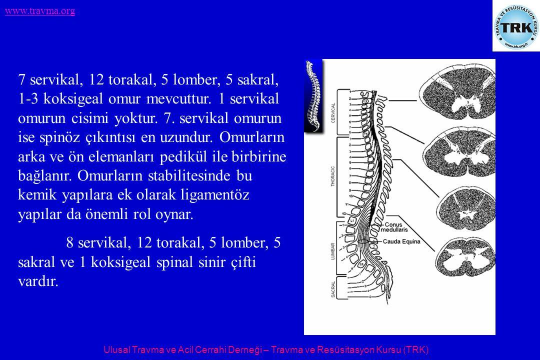 7 servikal, 12 torakal, 5 lomber, 5 sakral, 1-3 koksigeal omur mevcuttur. 1 servikal omurun cisimi yoktur. 7. servikal omurun ise spinöz çıkıntısı en uzundur. Omurların arka ve ön elemanları pedikül ile birbirine bağlanır. Omurların stabilitesinde bu kemik yapılara ek olarak ligamentöz yapılar da önemli rol oynar.