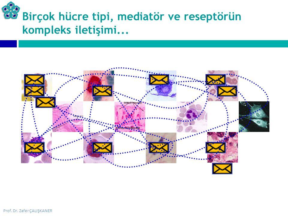Birçok hücre tipi, mediatör ve reseptörün kompleks iletişimi...