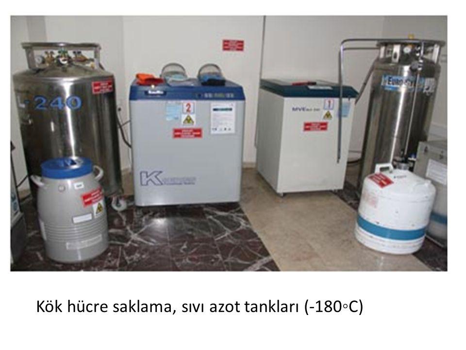 Kök hücre saklama, sıvı azot tankları (-180◦C)