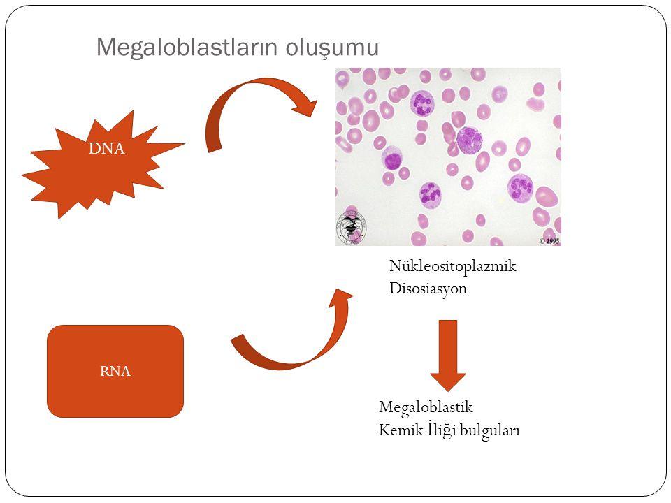 Megaloblastların oluşumu