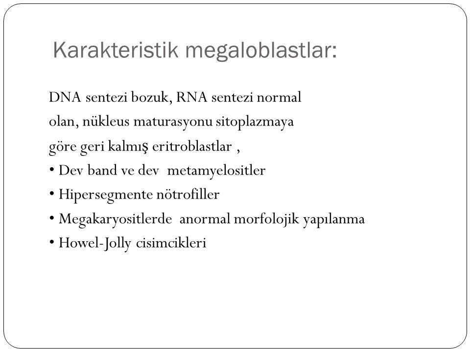 Karakteristik megaloblastlar:
