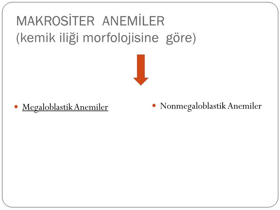 MAKROSİTER ANEMİLER (kemik iliği morfolojisine göre)