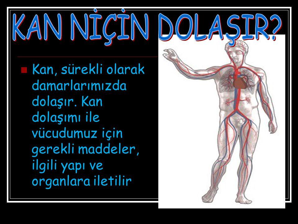 KAN NİÇİN DOLAŞIR. Kan, sürekli olarak damarlarımızda dolaşır.
