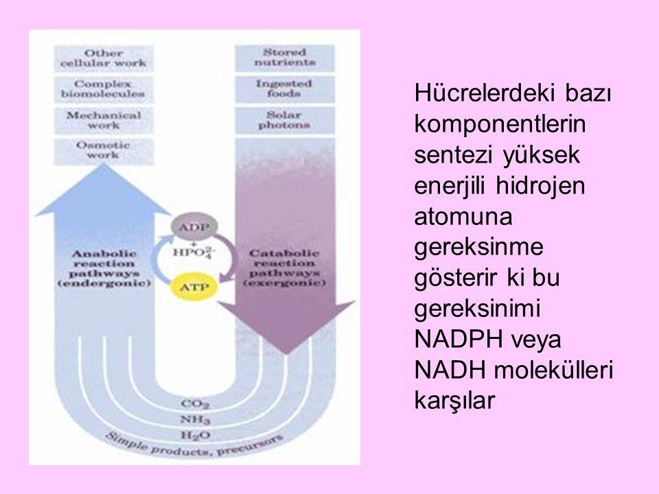 Hücrelerdeki bazı komponentlerin sentezi yüksek enerjili hidrojen atomuna gereksinme gösterir ki bu gereksinimi NADPH veya NADH molekülleri karşılar