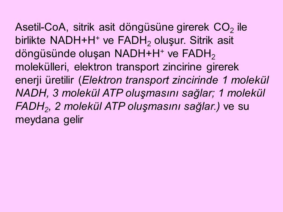 Asetil-CoA, sitrik asit döngüsüne girerek CO2 ile birlikte NADH+H+ ve FADH2 oluşur.