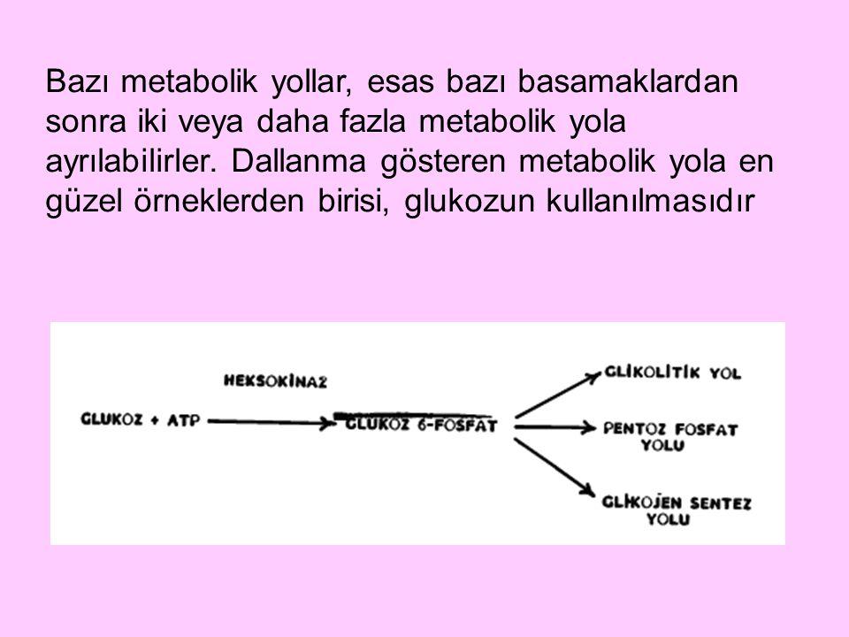 Bazı metabolik yollar, esas bazı basamaklardan sonra iki veya daha fazla metabolik yola ayrılabilirler.