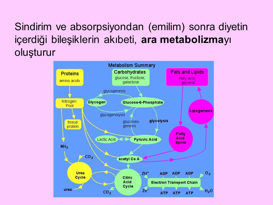 Sindirim ve absorpsiyondan (emilim) sonra diyetin içerdiği bileşiklerin akıbeti, ara metabolizmayı oluşturur