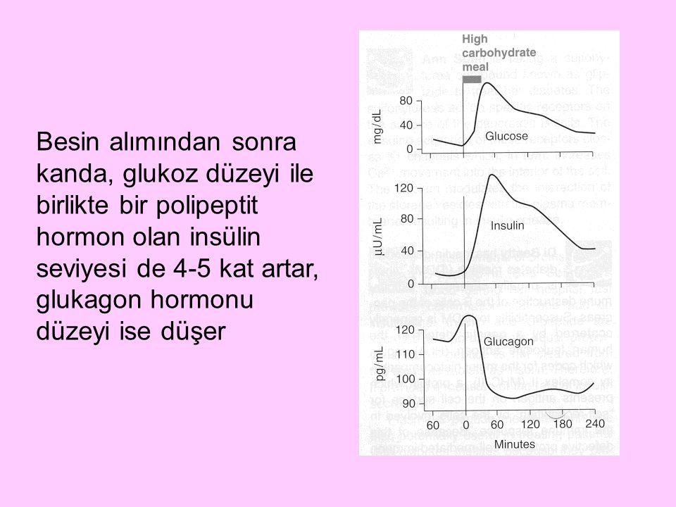 Besin alımından sonra kanda, glukoz düzeyi ile birlikte bir polipeptit hormon olan insülin seviyesi de 4-5 kat artar, glukagon hormonu düzeyi ise düşer