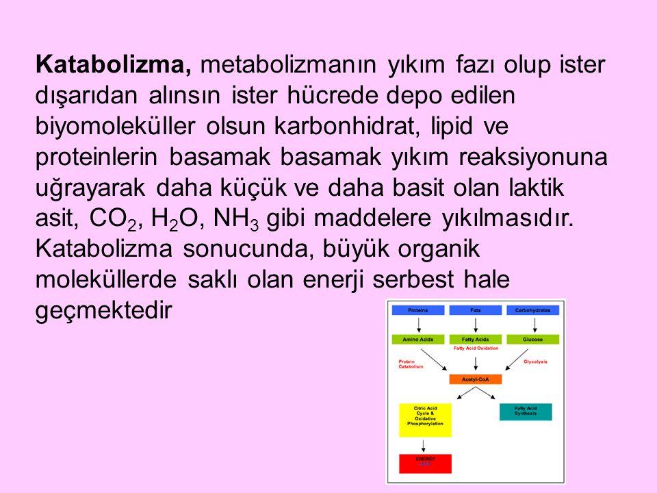 Katabolizma, metabolizmanın yıkım fazı olup ister dışarıdan alınsın ister hücrede depo edilen biyomoleküller olsun karbonhidrat, lipid ve proteinlerin basamak basamak yıkım reaksiyonuna uğrayarak daha küçük ve daha basit olan laktik asit, CO2, H2O, NH3 gibi maddelere yıkılmasıdır.
