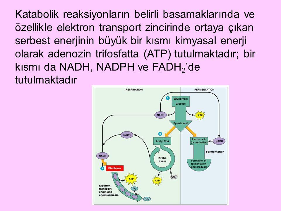 Katabolik reaksiyonların belirli basamaklarında ve özellikle elektron transport zincirinde ortaya çıkan serbest enerjinin büyük bir kısmı kimyasal enerji olarak adenozin trifosfatta (ATP) tutulmaktadır; bir kısmı da NADH, NADPH ve FADH2'de tutulmaktadır