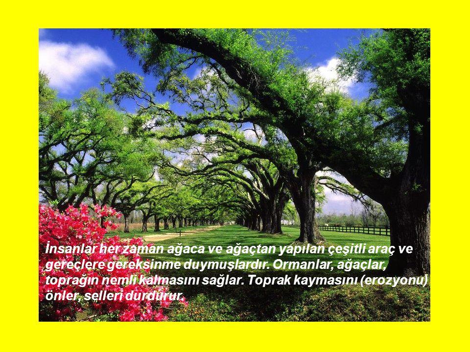 İnsanlar her zaman ağaca ve ağaçtan yapılan çeşitli araç ve gereçlere gereksinme duymuşlardır.