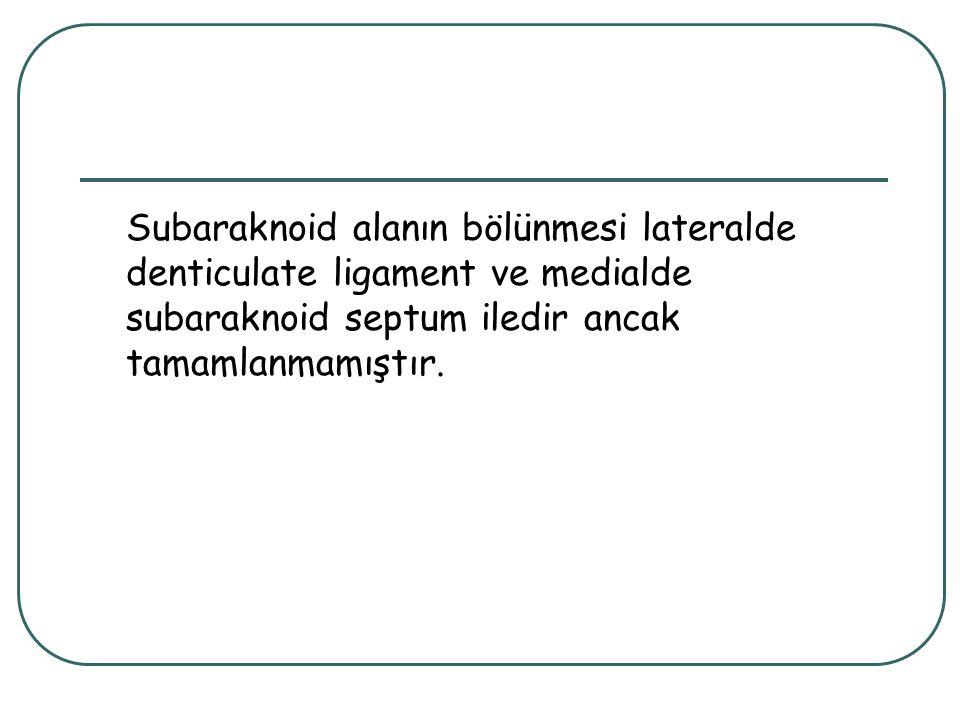 Subaraknoid alanın bölünmesi lateralde denticulate ligament ve medialde subaraknoid septum iledir ancak tamamlanmamıştır.