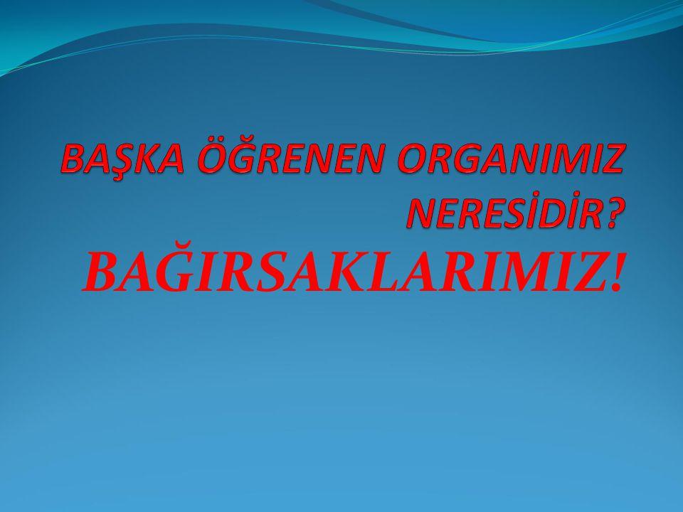 BAŞKA ÖĞRENEN ORGANIMIZ NERESİDİR