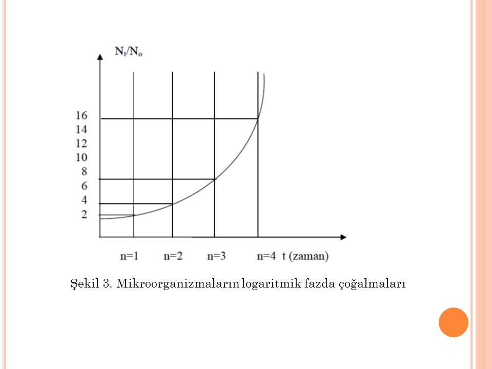 Şekil 3. Mikroorganizmaların logaritmik fazda çoğalmaları