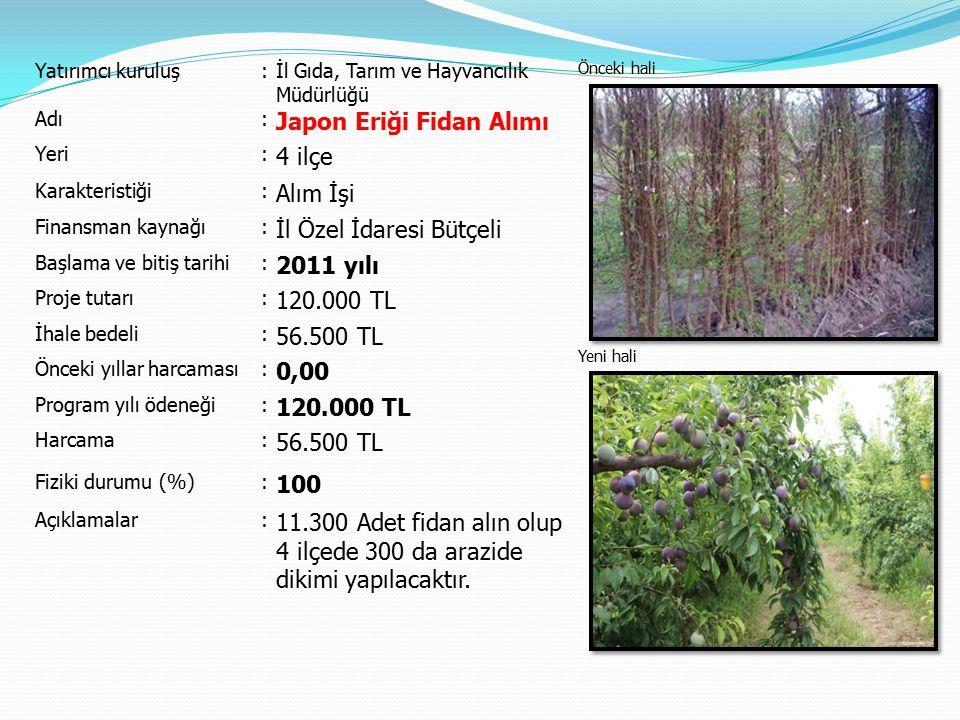 Japon Eriği Fidan Alımı 4 ilçe Alım İşi İl Özel İdaresi Bütçeli
