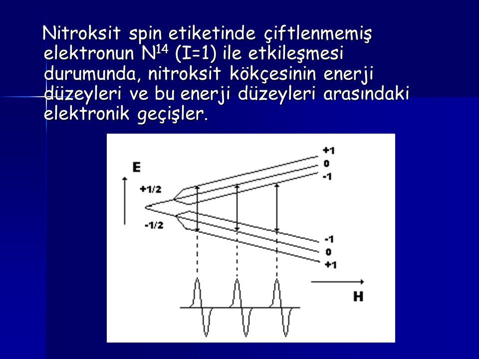 Nitroksit spin etiketinde çiftlenmemiş elektronun N14 (I=1) ile etkileşmesi durumunda, nitroksit kökçesinin enerji düzeyleri ve bu enerji düzeyleri arasındaki elektronik geçişler.