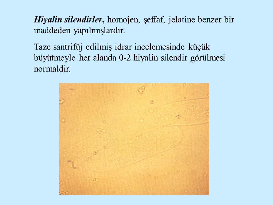 Hiyalin silendirler, homojen, şeffaf, jelatine benzer bir maddeden yapılmışlardır.