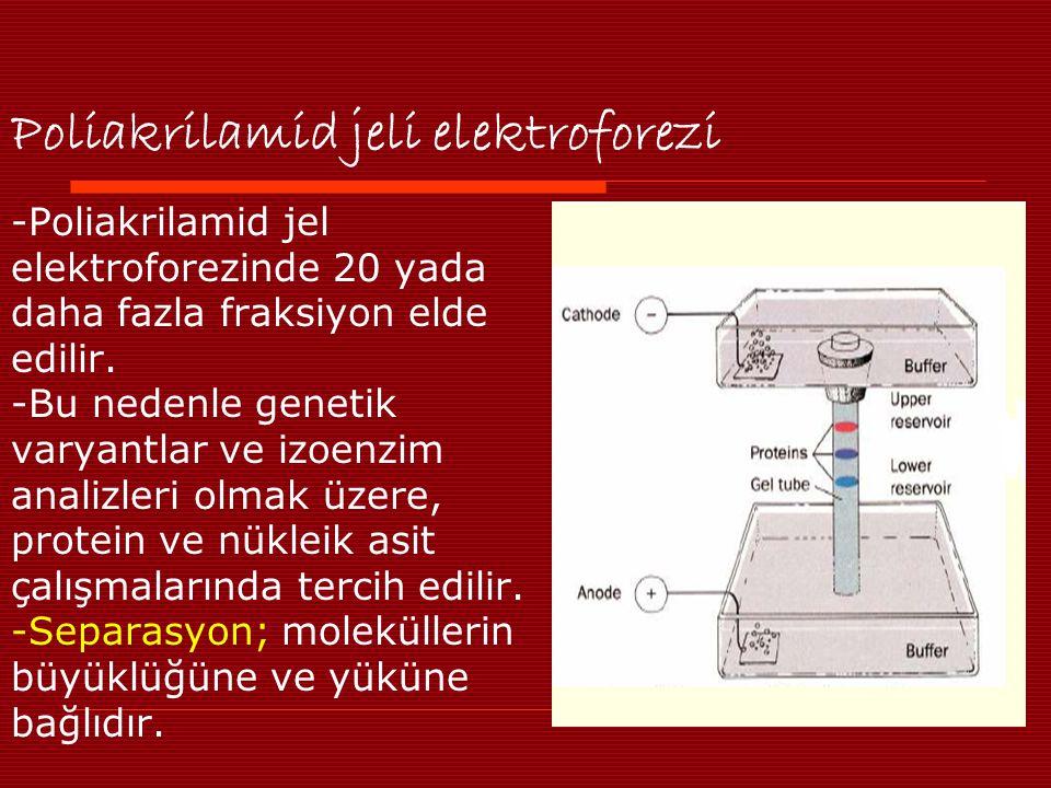 Poliakrilamid jeli elektroforezi