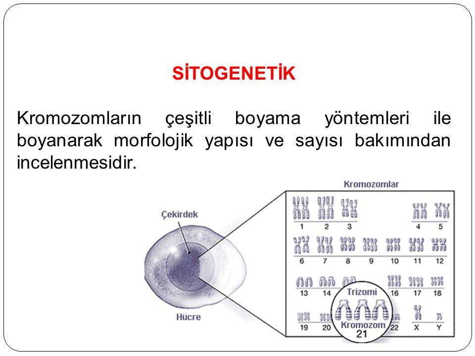 SİTOGENETİK Kromozomların çeşitli boyama yöntemleri ile boyanarak morfolojik yapısı ve sayısı bakımından incelenmesidir.