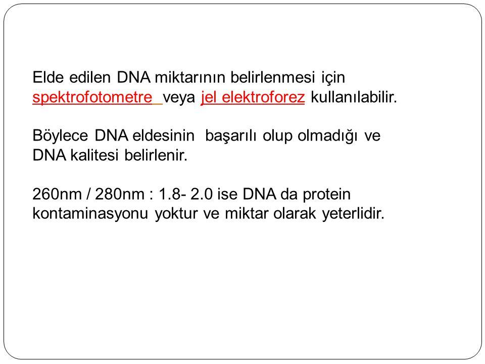 Elde edilen DNA miktarının belirlenmesi için