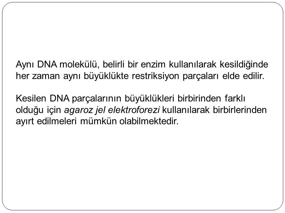 Aynı DNA molekülü, belirli bir enzim kullanılarak kesildiğinde