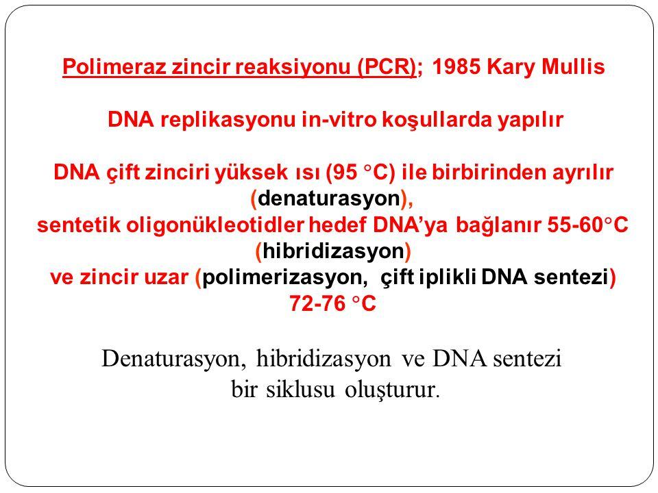 Denaturasyon, hibridizasyon ve DNA sentezi bir siklusu oluşturur.