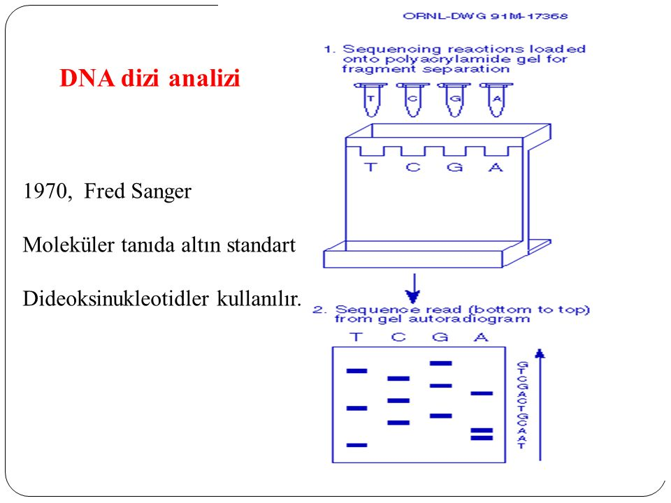 DNA dizi analizi , Fred Sanger Moleküler tanıda altın standart