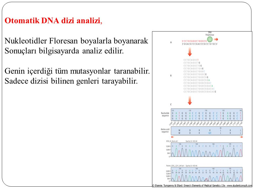Otomatik DNA dizi analizi,