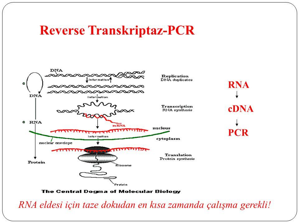Reverse Transkriptaz-PCR