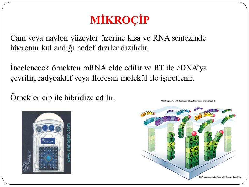 MİKROÇİP Cam veya naylon yüzeyler üzerine kısa ve RNA sentezinde hücrenin kullandığı hedef diziler dizilidir.