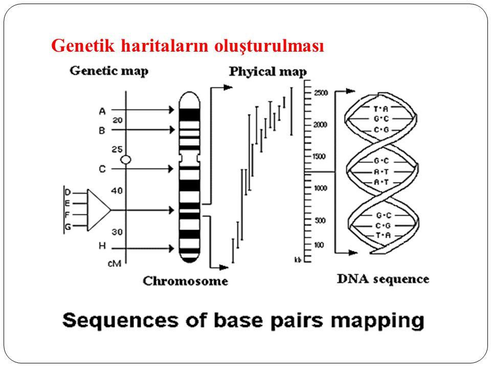 Genetik haritaların oluşturulması