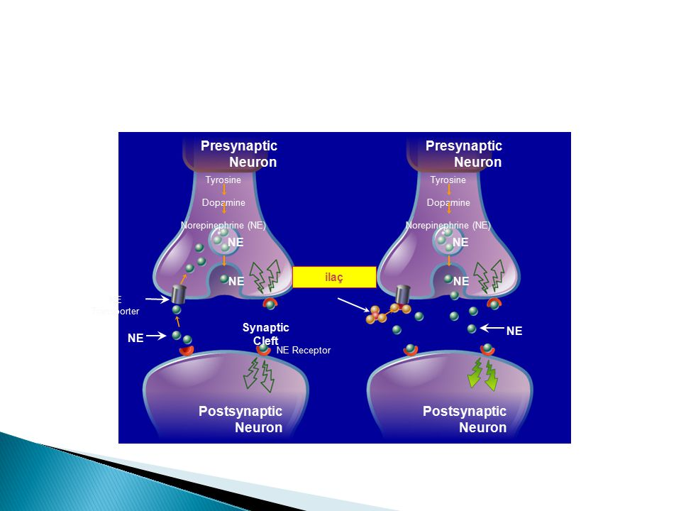 Presynaptic Neuron Postsynaptic Neuron NE ilaç Synaptic Cleft 12