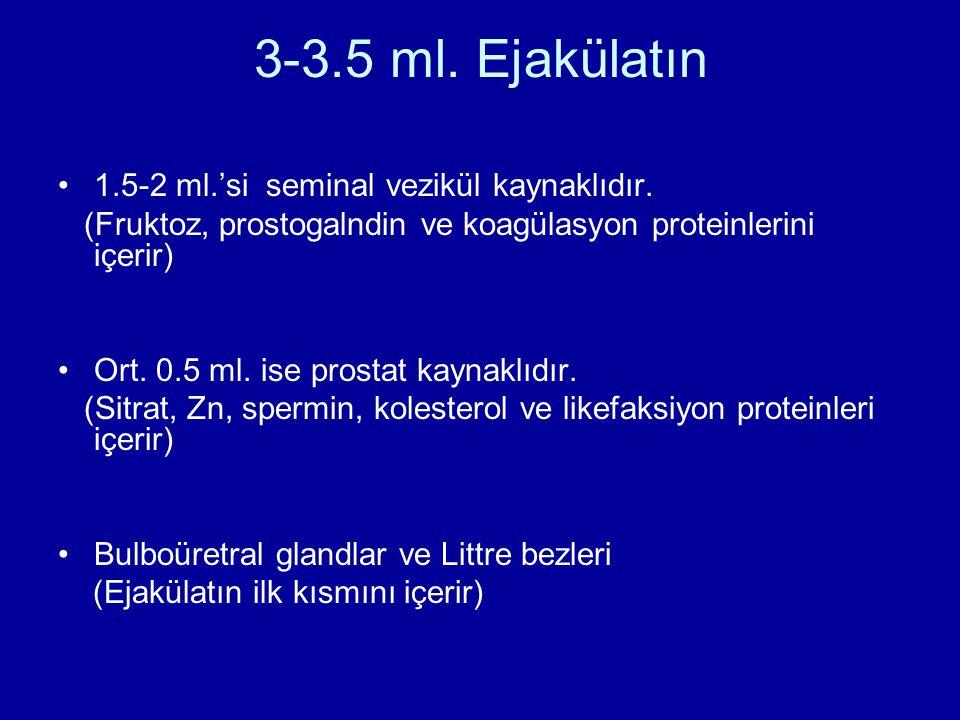 3-3.5 ml. Ejakülatın 1.5-2 ml.'si seminal vezikül kaynaklıdır.