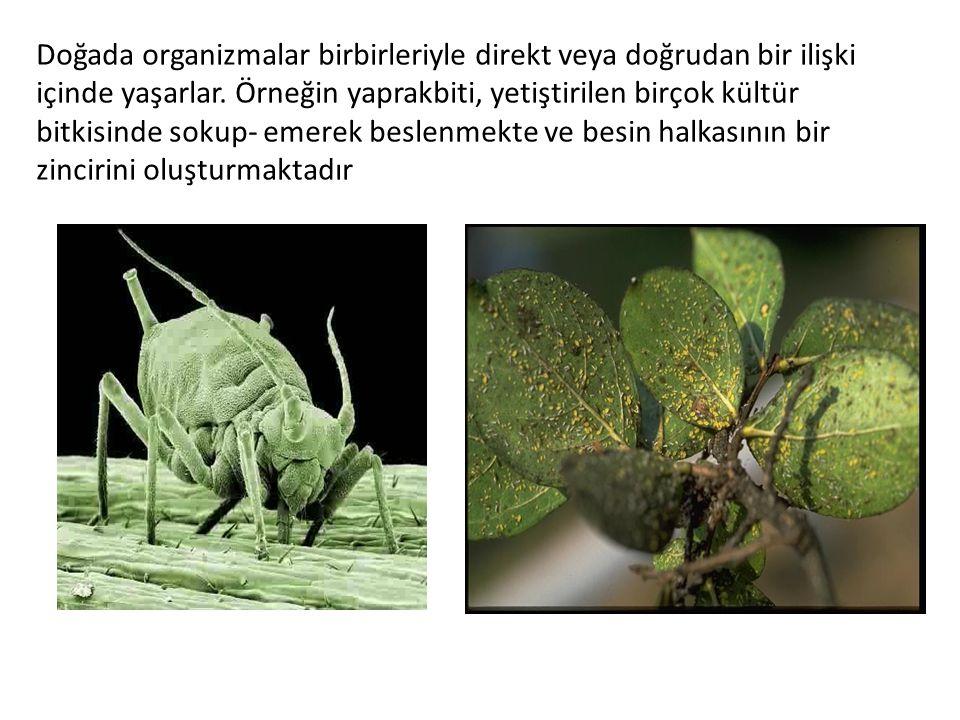 Doğada organizmalar birbirleriyle direkt veya doğrudan bir ilişki içinde yaşarlar.